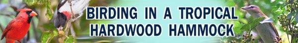 FKH-Birding-Hardwood-Hammock-2
