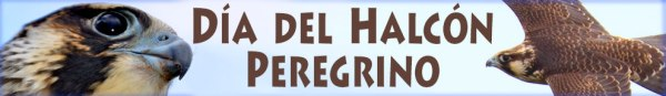 FKH-HalconPeregrino