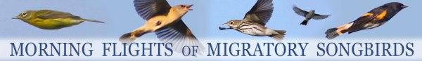 FKH-Migratory-Songbirds