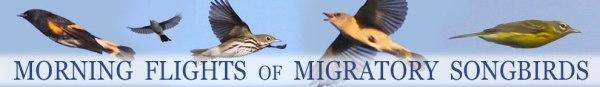 FKH-Migratory-Songbirds2