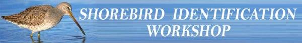FKH-Shorebird-ID