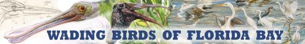 FKH-Wading-Birds