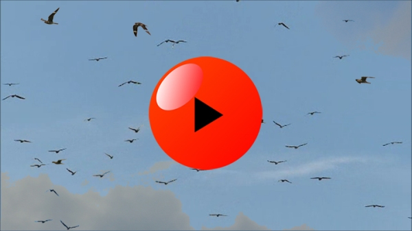 FKH Nighthawk Video ICON