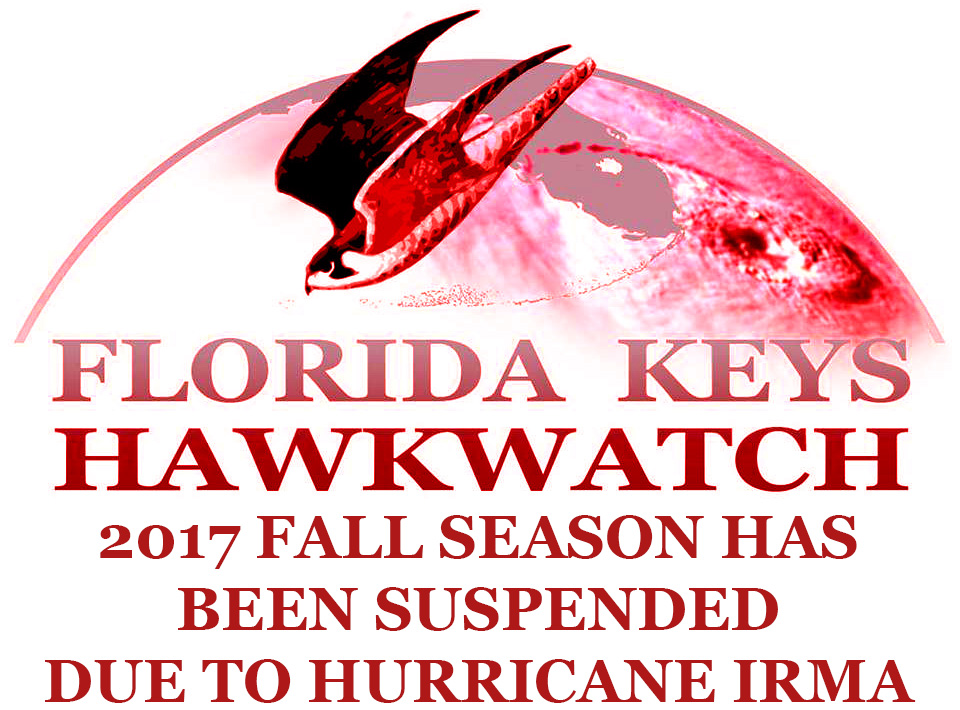 the department of environmental protection u0027s florida park service has announced that curry hammock state park and long key state park remain closed     florida keys hawkwatch   dedicated to promoting the appreciation and      rh   floridakeyshawkwatch wordpress